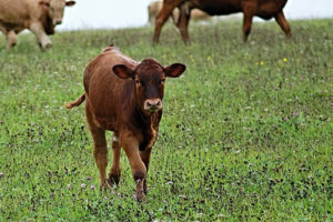 Livestock and crop damage prevention with Predator Control Services in Georgia